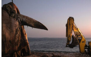 Dead whale found floating off Piraeus